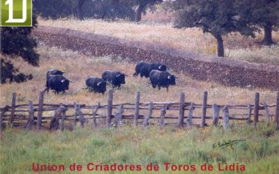 Entretien avec Antonio BAÑUELOS – Président de l'Unión de Criadores de Toros de Lidia